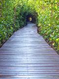 Underpass of trees. Boardwalk underpass of trees to the otherworldly of deep forest Stock Photo