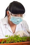 undersök för forskaretomater för leafs den nya kvinnan Royaltyfria Bilder