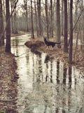 Undersökande The Creek Arkivfoton