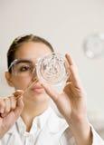 undersökande kvinnligprövkopiaforskare Arkivbild