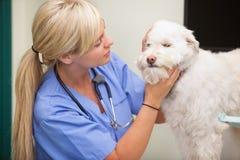 undersökande kvinnligveterinär för hund Arkivfoto