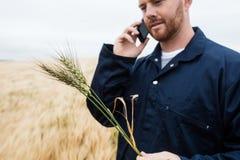 Undersökande skördar för bonde, medan tala på mobiltelefonen i fältet Arkivbild
