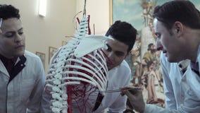Undersökande skelett för medicinare arkivfilmer