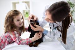 Undersökande tänder för veterinär av en hund, medan göra undersökning Royaltyfri Bild