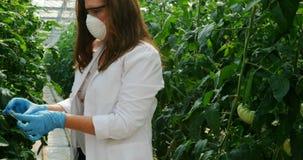Undersökande växter för forskare i växthuset 4k arkivfilmer