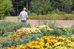 Undersökande växter för kvinnabiolog Royaltyfria Bilder