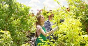 Undersökande växter för lyckliga par i trädgård arkivfilmer