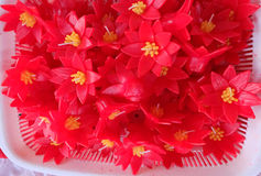 undersöker formad lotusblomma Royaltyfria Bilder