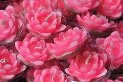 undersöker lotusblommapink Arkivbild