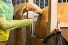 Undersöker veterinär- forskning för hästar med blod och internt arkivbilder
