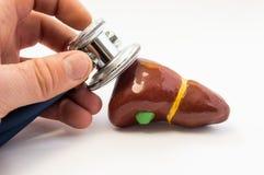 Undersökning av lever Doktor som tätt rymmer stetoskopet i handen, föra av examen av mänskliga leverformer upp Begreppsfoto för d royaltyfri fotografi