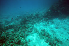 Undersea Stock Image