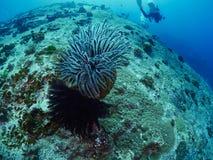 undersea Стоковые Фото