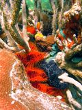 Undersea colors Royalty Free Stock Photography