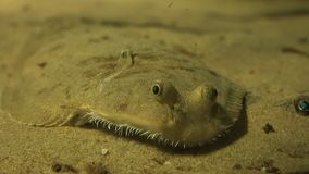 Undersea Creature Marine Life. Fish and marine life underwater stock footage