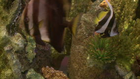 Undersea flora and fauna (18 of 28) stock footage