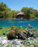 Undersea garden. Surface and underwater view with mangrove, a boathouse, colorful tropical fish and coral, Bocas del Toro, Panama stock photography