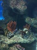 Undersea korallbildande Royaltyfri Foto