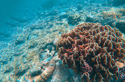 Undersea landscape with coral reef. Diverse coral shapes. Saltwater wildlife. Stock Image