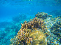Undersea landscape with coral reef diversity. Oceanic wildlife in exotic island seashore. Stock Images