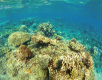 Undersea landscape with coral reef. Tropical fishes in wild nature. Royalty Free Stock Photo