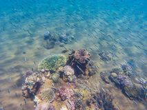 Undersea landscape with fishes and young coral reef. Tropical seashore animals underwater photo. Sea bottom perspective landscape. Oceanic wildlife undersea royalty free stock images