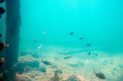 Undersea landscape seen from the Underwater Observatory, Busselton Jetty, WA, Australia. Undersea landscape seen from the Underwater Observatory, Busselton Jetty royalty free stock photography