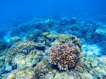 Undersea landskap för korallrev Olika korallformer Korallfisk i rev Arkivbilder