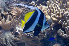 Undersea life Stock Image