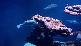 Undersea life. Video of undersea life in tropical sea (ocean) aquarium stock video footage