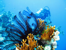 Undersea scene Royalty Free Stock Photos