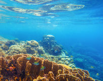 Undersea scenery with coral reef and tropical fishes. Blue sea view with marine fauna. Oceanic ecosystem. Beautiful underwater photo for banner template or Stock Images