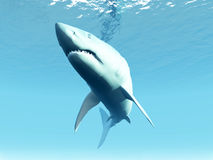 Undersea Shark. A shark that is swimming under the surface of the sea Stock Image