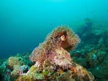Undersea storartad anemon med fisken Fotografering för Bildbyråer