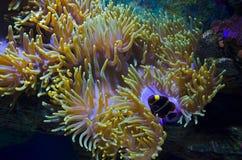 undersea värld Arkivbilder