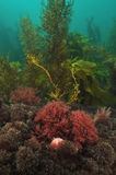Undersea vegetation in shallow water Stock Image
