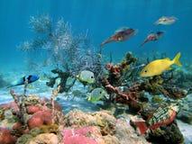 Undersea wildlife Royalty Free Stock Photo