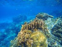 Undersea wildlife in exotic island seashore. Undersea landscape with oceanic animals. Undersea wildlife in exotic island seashore. Tropical sea lagoon with huge Stock Photos