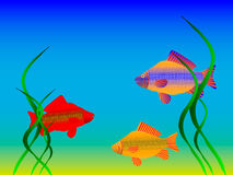 The undersea world. Fishes and seaweeds Stock Photos