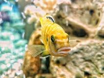 Undersea world Stock Photo