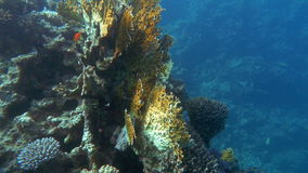 Undersea world and coral reef dwellers stock footage
