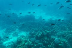 Undersea world. Fish on the coral reef.  Royalty Free Stock Photos