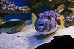 Undersea world, fish and corals Royalty Free Stock Photos