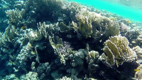 Undersea world. Fishes and corals in Red Sea stock video footage