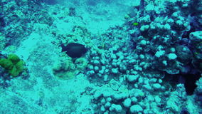 Undersea world. Fishes scurry among reefs stock video
