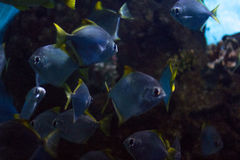 Undersea world Royalty Free Stock Photos