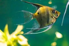 Undersea world Stock Photography