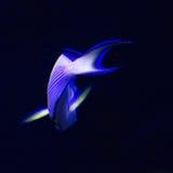 Undersea world Stock Images