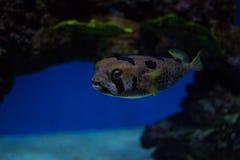 Undersea world Stock Image