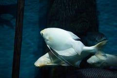Undersea world Stock Photos
